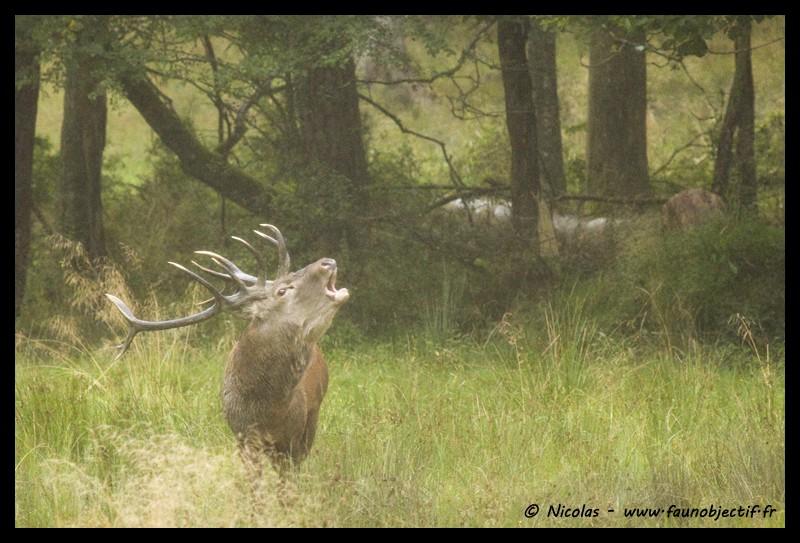 Mes photos animalières + ajout 22/04=> le voilà en bois... - Page 5 Img_6410