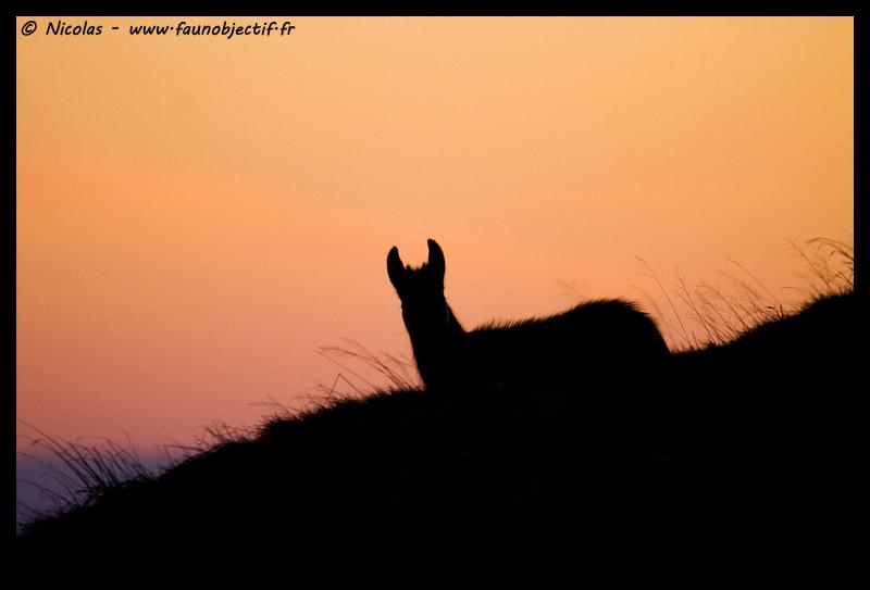 Mes photos animalières + ajout 22/04=> le voilà en bois... - Page 5 Img_7011