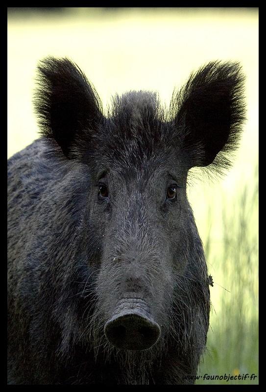 Mes photos animalières + ajout 22/04=> le voilà en bois... - Page 4 Sangli11