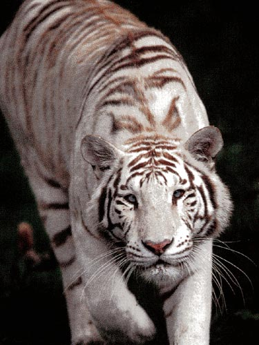 De GSXES à KATANA Tigre-10
