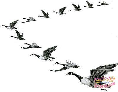 ما سبب تحليق الطيور المهاجرة على شكل حرف V Geesef10