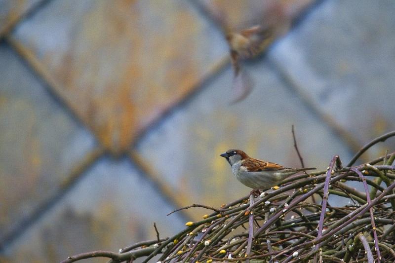 Mes premiers shoot d'oiseaux Img_7110