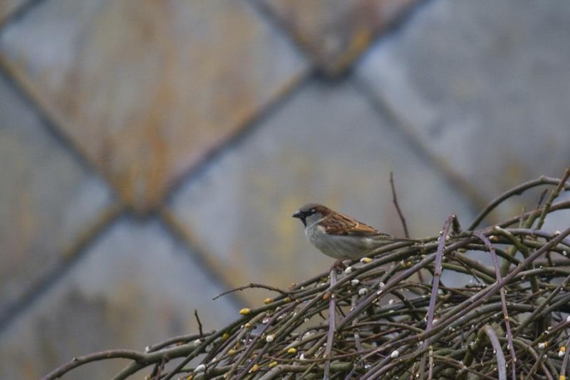 Mes premiers shoot d'oiseaux Img_7111