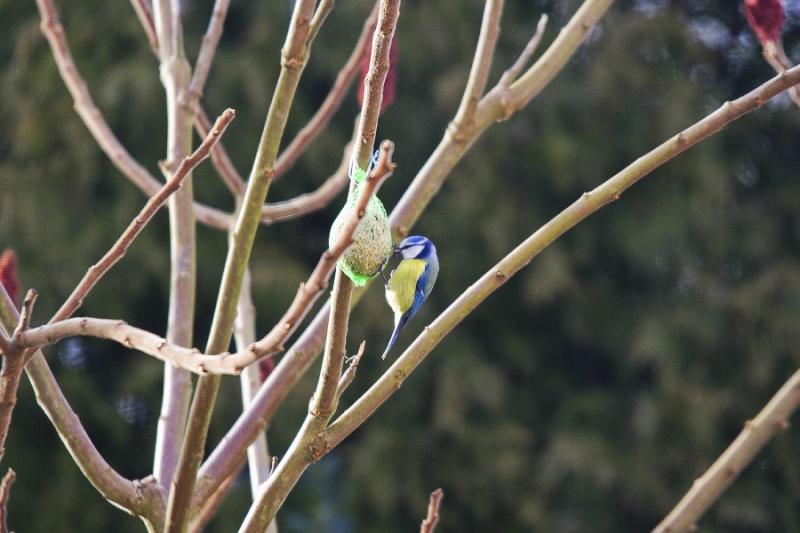 Mes premiers shoot d'oiseaux Img_7210