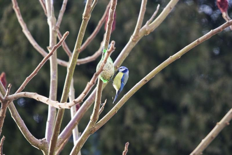 Mes premiers shoot d'oiseaux Img_7211
