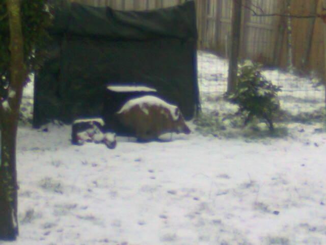 ce matin le sol est blanc Photo020