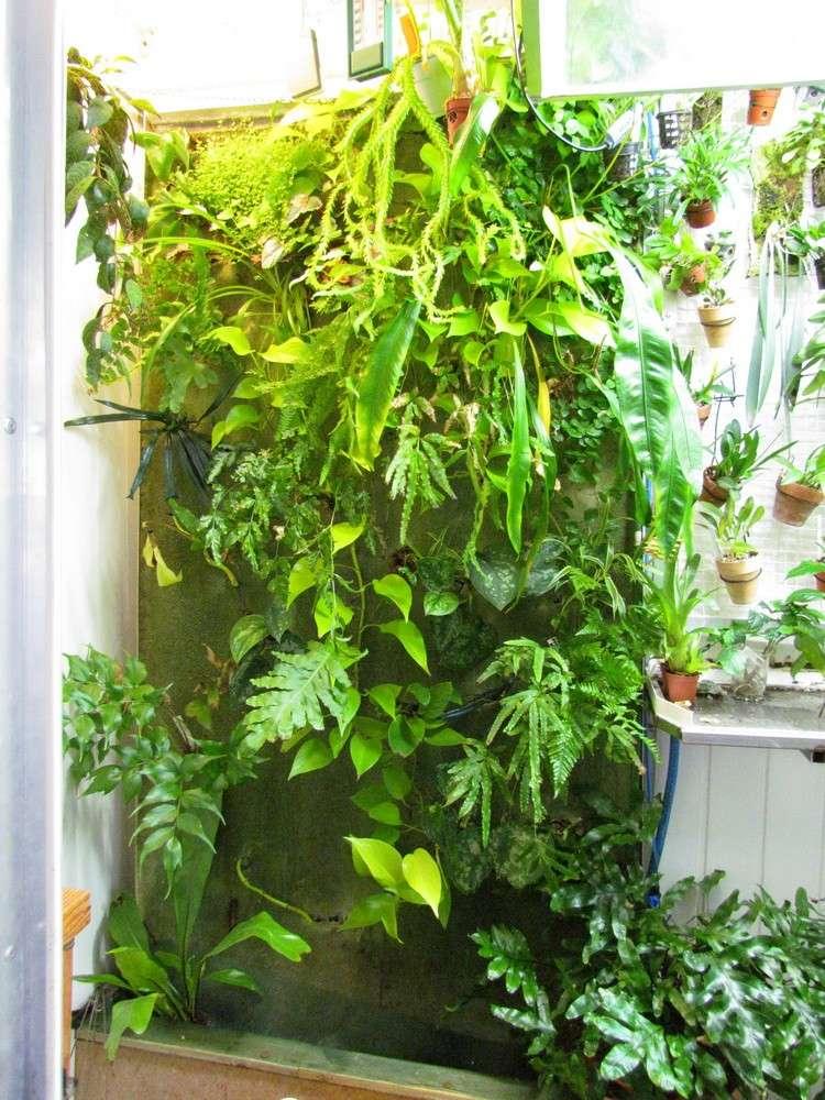 Petit mur végétal Img_0057