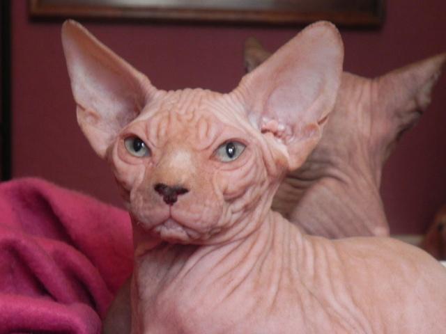 1 er Thème : Quand votre/vos chats étaient chatons 27754311