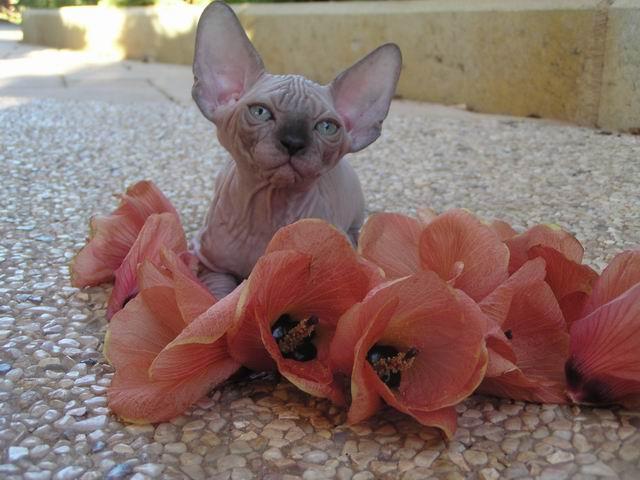 1 er Thème : Quand votre/vos chats étaient chatons Resize10