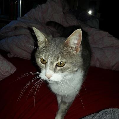 Nouvelles de nos chats partis en Allemagne le 7 décembre 2012  32427_14