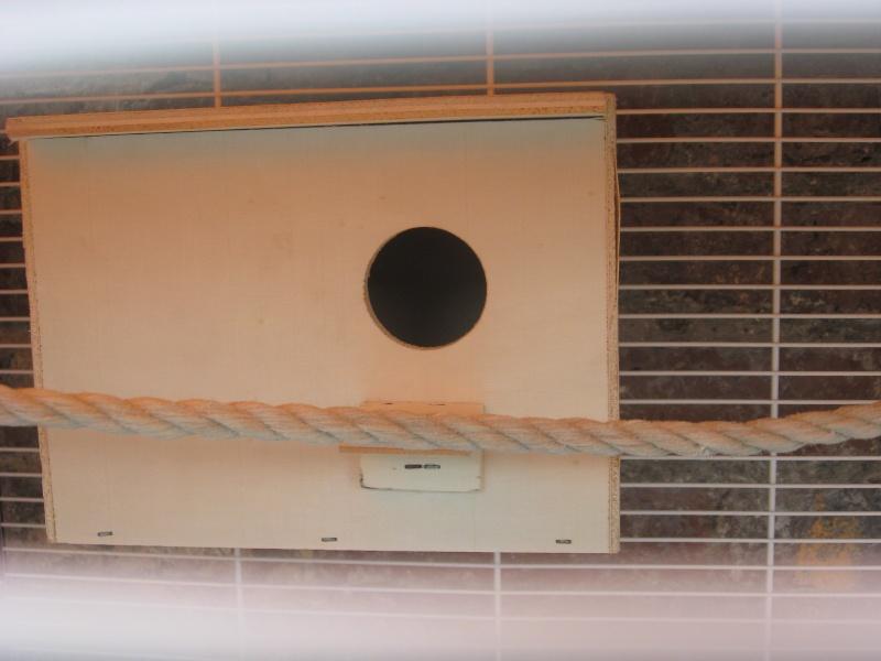 petite photo de mais 4 perruches ondulées  Img_0314