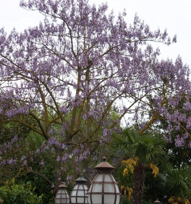 Les Jardins, Les Fleurs et l'Eau au DLP Disney74