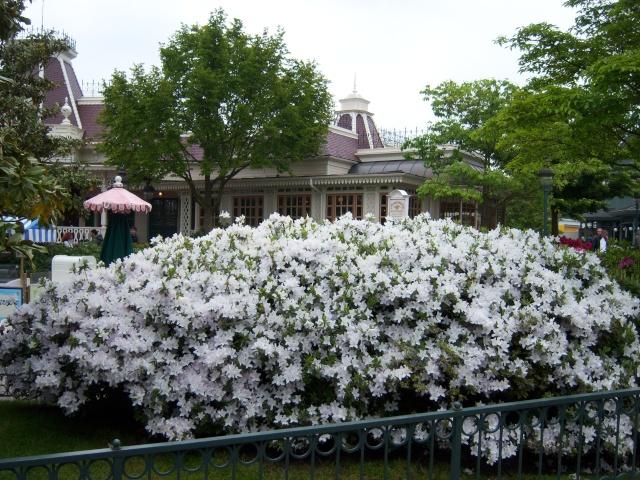 Les Jardins, Les Fleurs et l'Eau au DLP Disney78