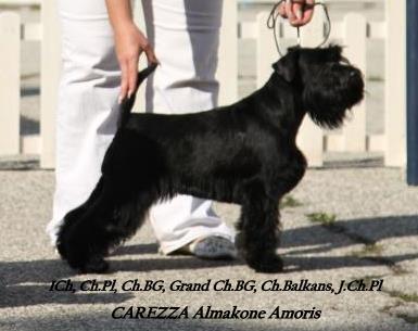 J.Ch. CAREZZA Almakone Amoris Zoya_b10