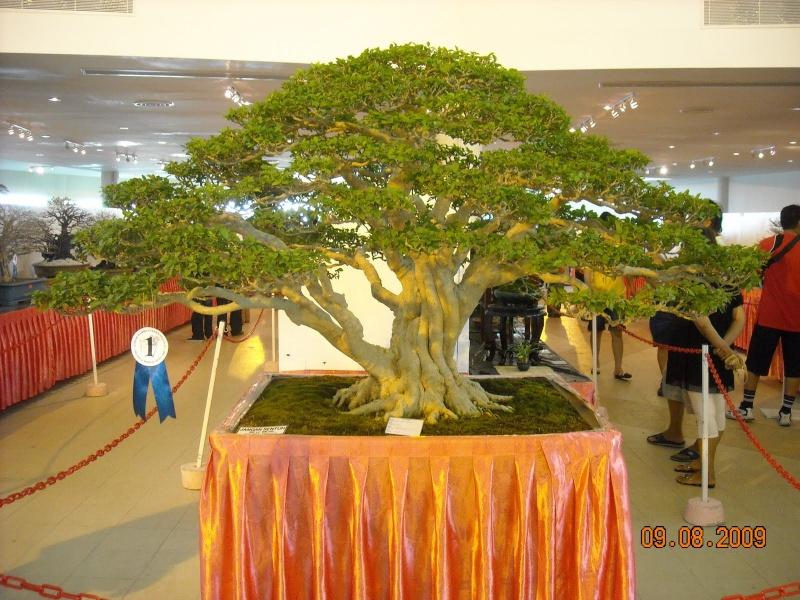 Some Stunning Wrightia Religiosa from Malaysia. Dscn1110