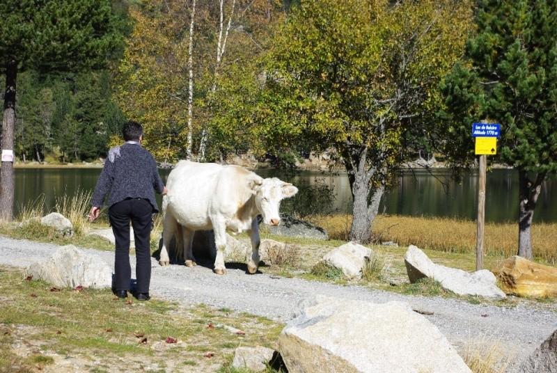 Lac de Balcère Octobre 2011 Imgp1234
