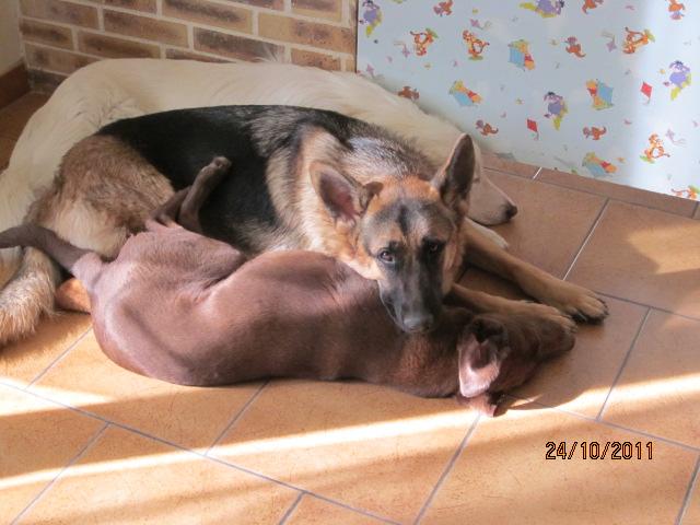 Début des démarches vétérinaires pour Chocapic Img_2733