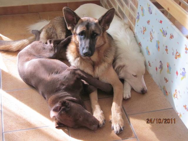 Début des démarches vétérinaires pour Chocapic Img_2734