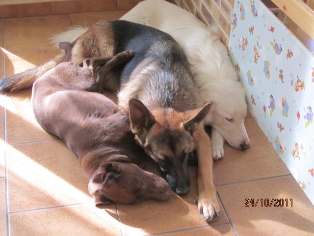 Début des démarches vétérinaires pour Chocapic Img_2735