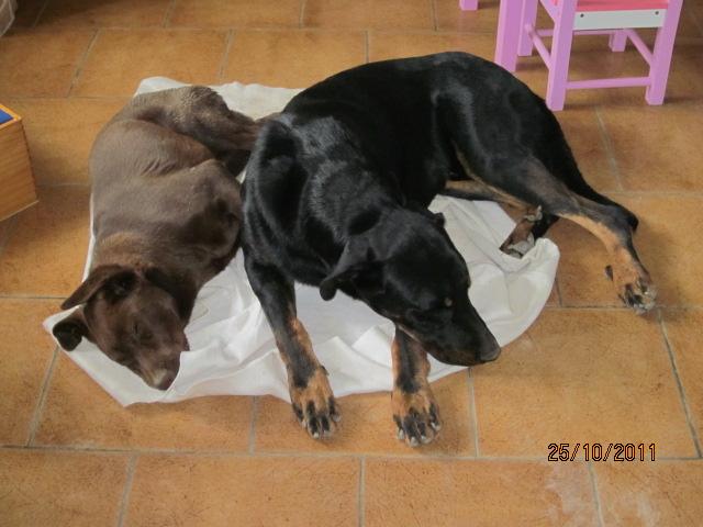 Début des démarches vétérinaires pour Chocapic Img_2736