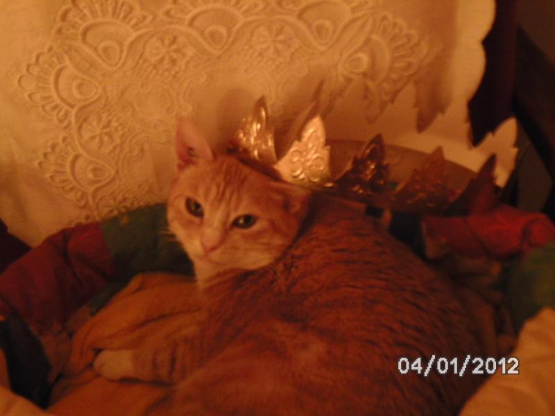 Caline,  née le 1/01/1996, identifiée HPB743 Bonheu10