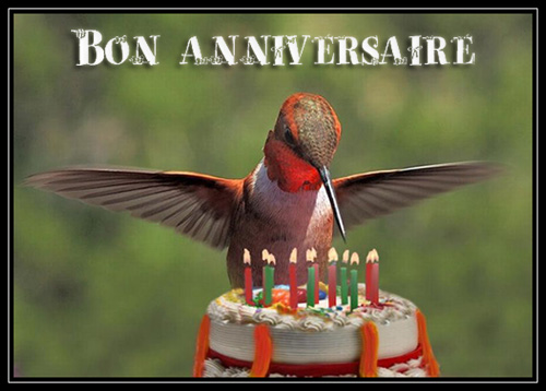 bon anniversaire oiseau