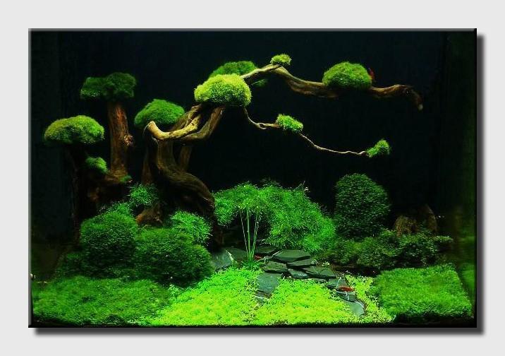 Un aquarium sans substrat nutritif  1_bons10
