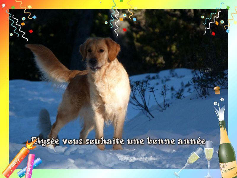 Bonne année 2012 P1000113