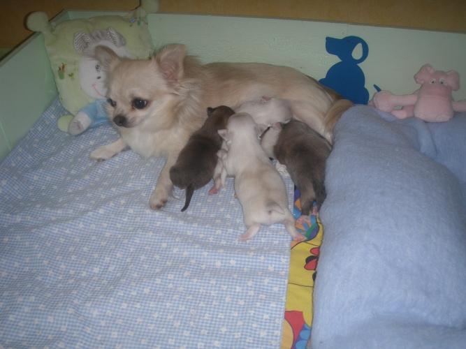 estrasse maman depuis cette nuit (NOUVELLES photos et VIDÉOS PAGE 9) - Page 3 P7060024