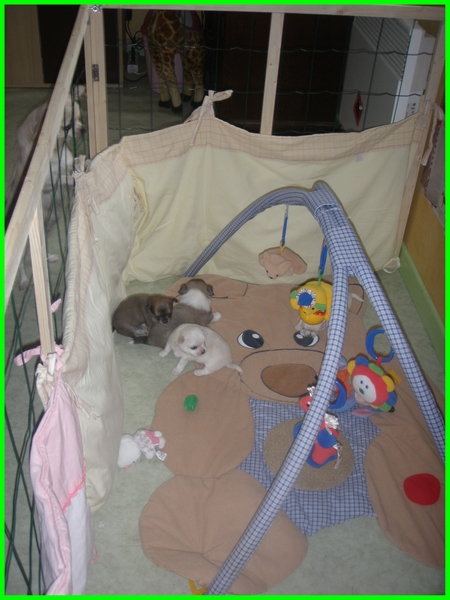estrasse maman depuis cette nuit (NOUVELLES photos et VIDÉOS PAGE 9) - Page 5 P7200010