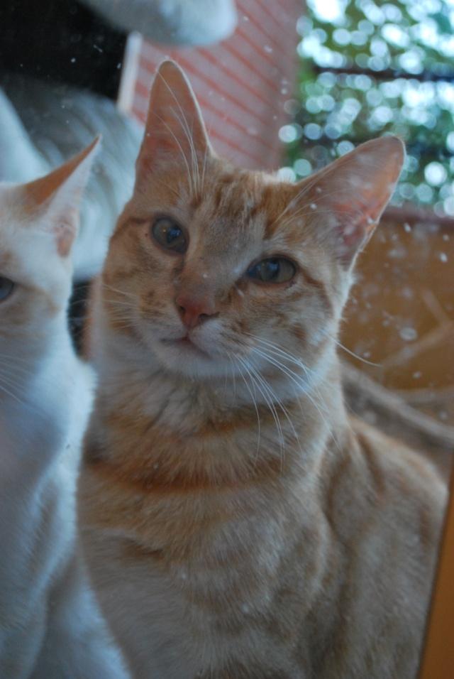 Photos chatons sur mon balcon - Page 3 Photo_18