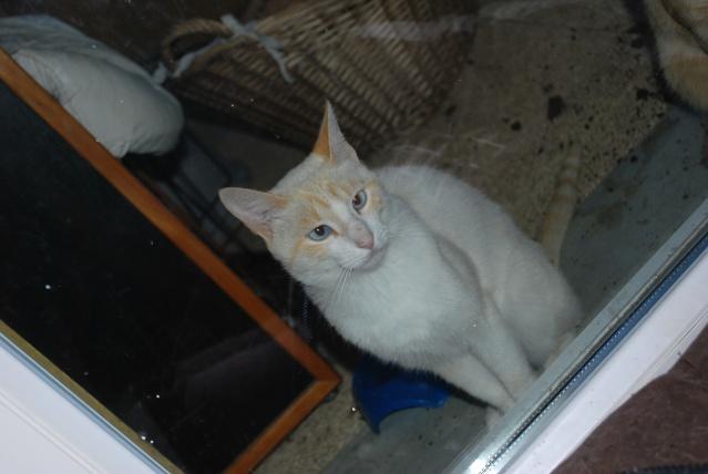 Photos chatons sur mon balcon - Page 3 Photo_20