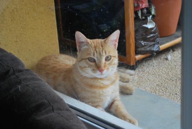 Photos chatons sur mon balcon - Page 3 Photo_31