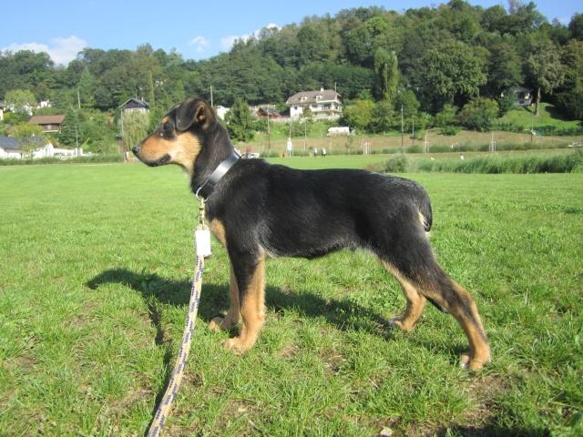 Kami, chien de randonnée 0110
