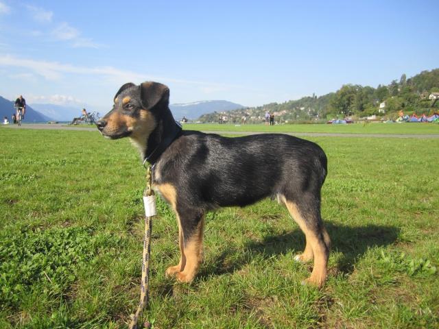 Kami, chien de randonnée 0310