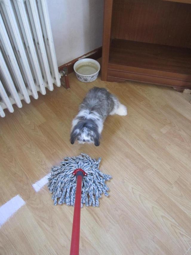 Kami, chien de randonnée - Page 4 0312