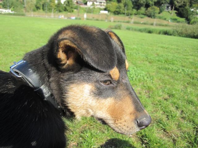 Kami, chien de randonnée 0510