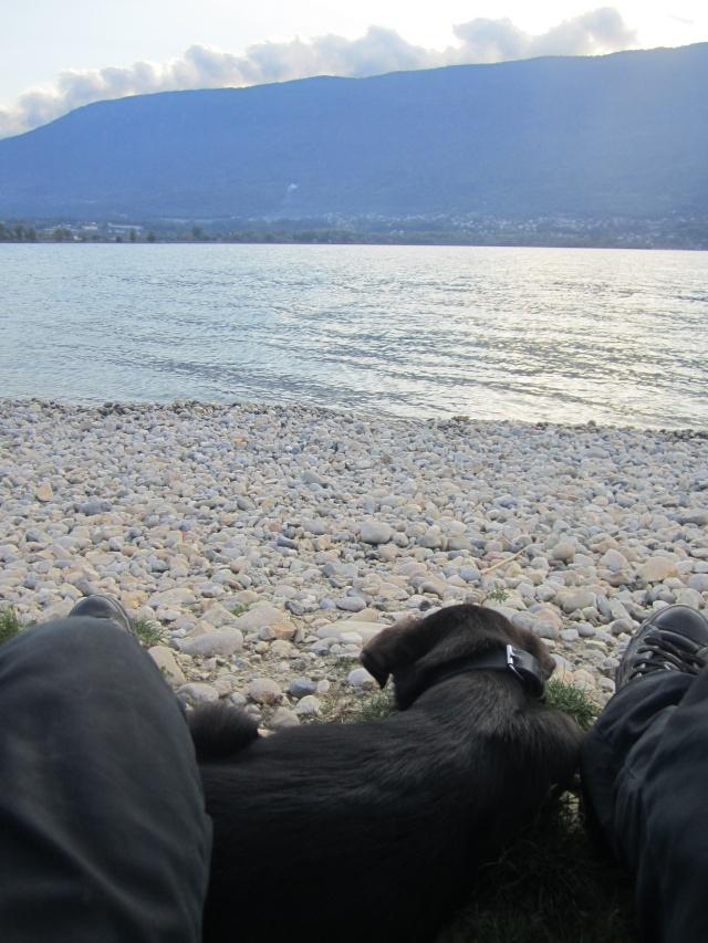 Kami, chien de randonnée 0712