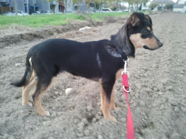 Kami, chien de randonnée 07_kam12