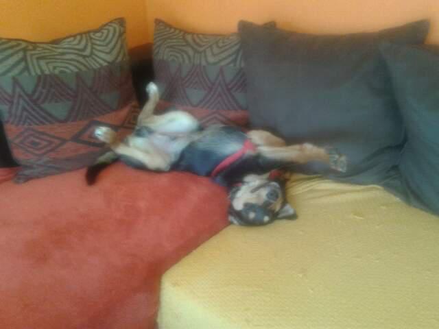 Kami, chien de randonnée 1013