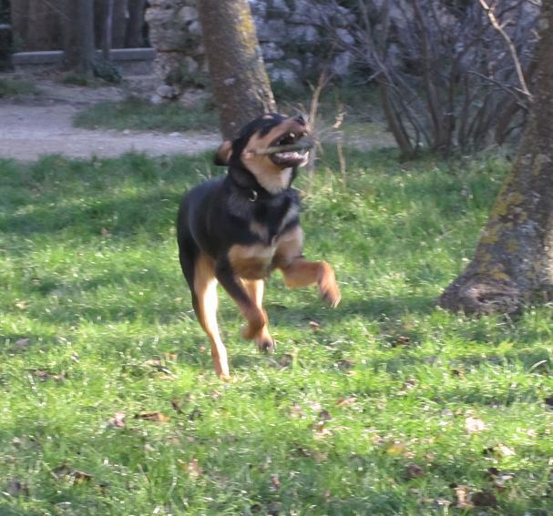 Kami, chien de randonnée - Page 3 10211