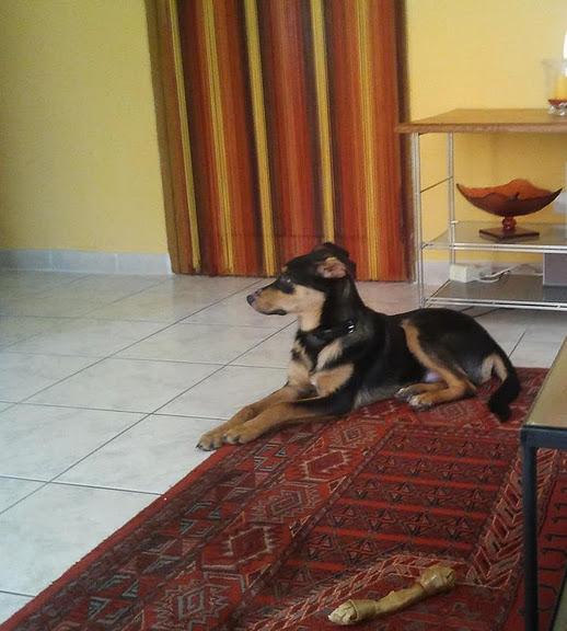 Kami, chien de randonnée - Page 3 10611