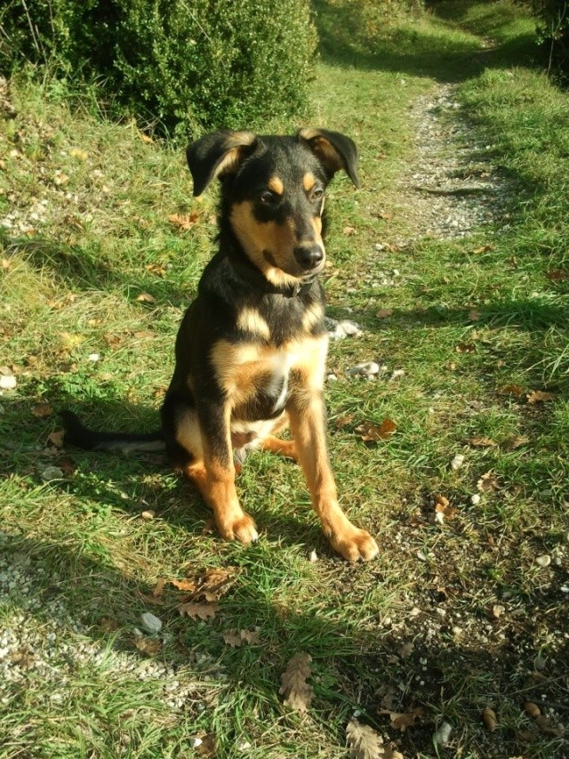 Kami, chien de randonnée 12_110
