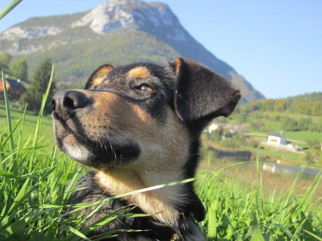 Kami, chien de randonnée 1712