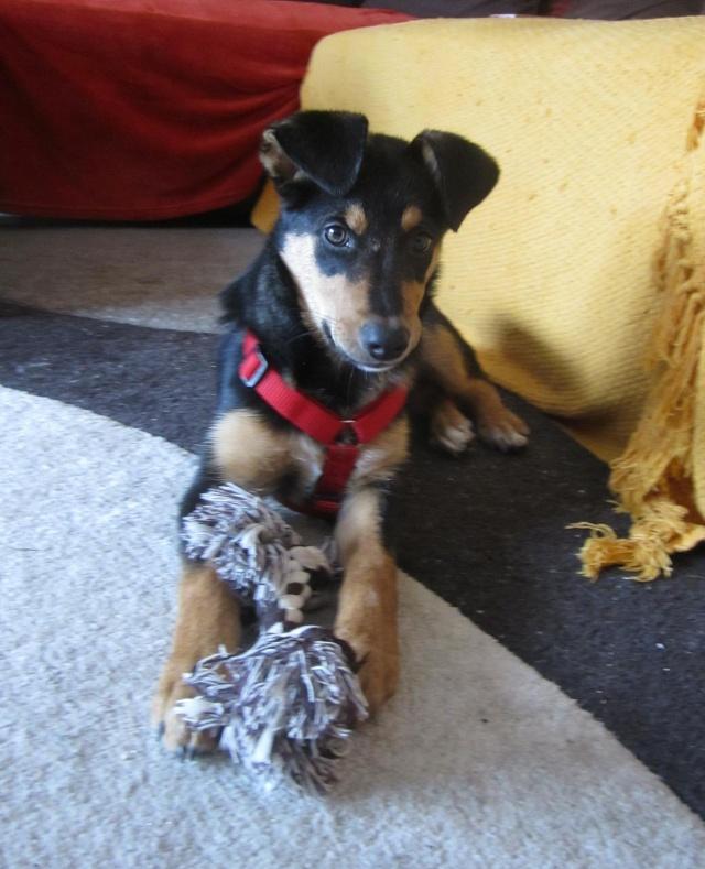 Kami, chien de randonnée 1810