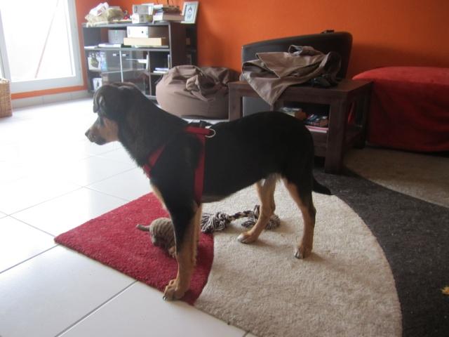 Kami, chien de randonnée 2010