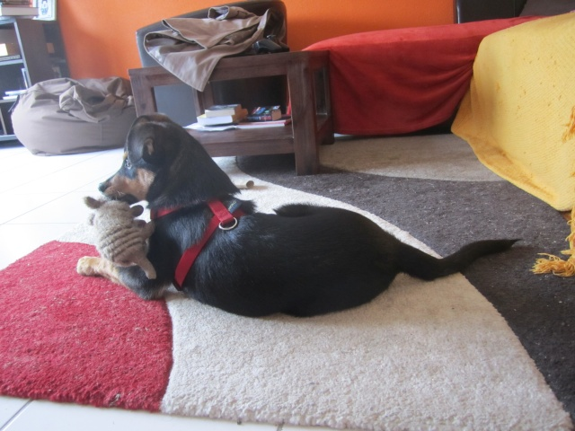 Kami, chien de randonnée 2110