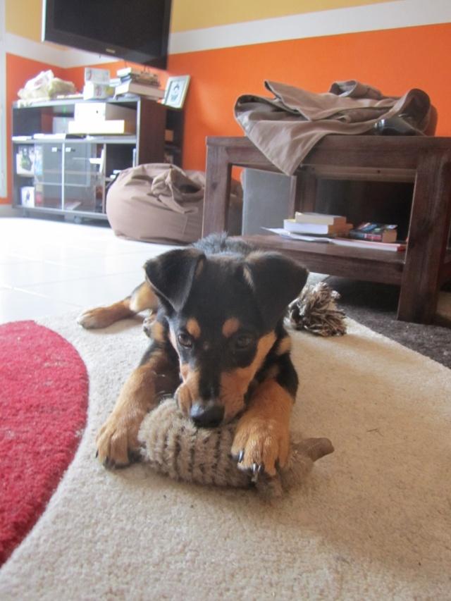 Kami, chien de randonnée 2212