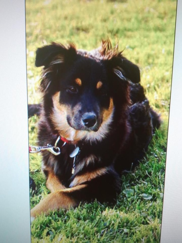 Kami, chien de randonnée 30836210