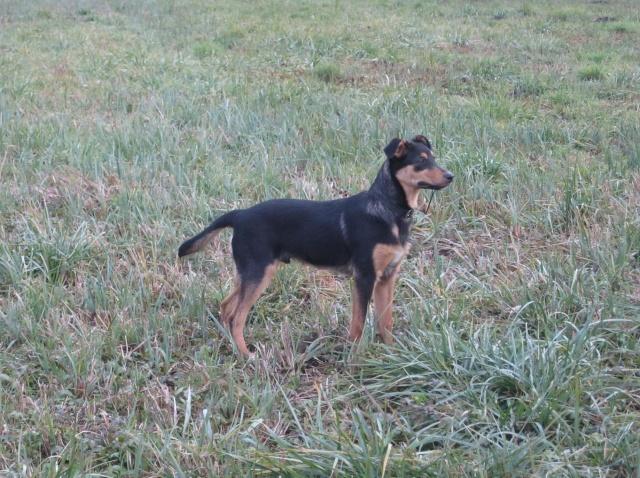 Kami, chien de randonnée - Page 2 6_11